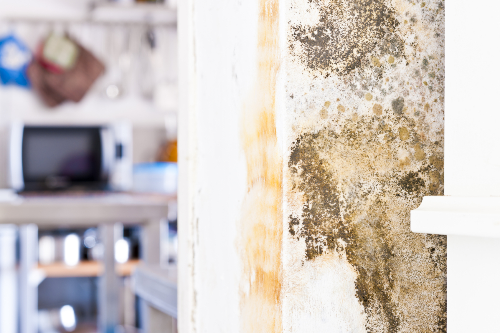 Mold on the wallpaper - why it occurs and how to get rid